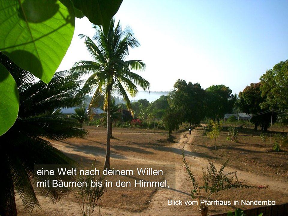 eine Welt nach deinem Willen mit Bäumen bis in den Himmel, Blick vom Pfarrhaus in Nandembo