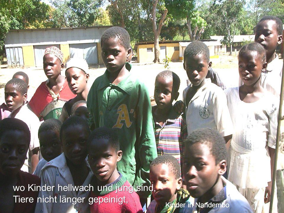 wo Kinder hellwach und jung sind, Tiere nicht länger gepeinigt, Kinder in Nandembo