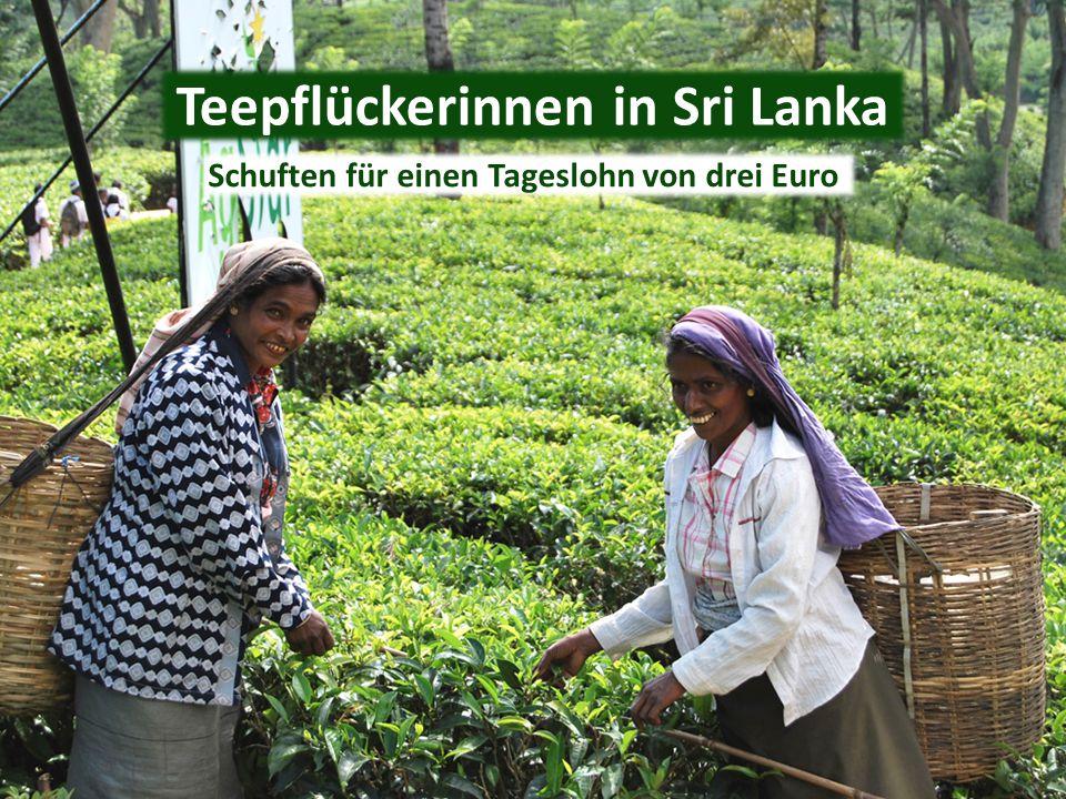 Teepflückerinnen in Sri Lanka Schuften für einen Tageslohn von drei Euro