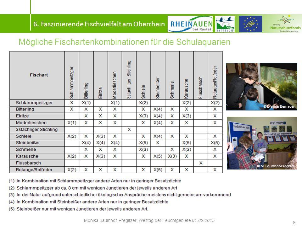 Aquarienbesatz der ersten vier Modellschulen 9 6.
