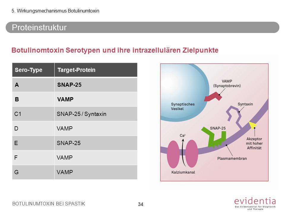 Proteinstruktur Botulinomtoxin Serotypen und ihre intrazellulären Zielpunkte BOTULINUMTOXIN BEI SPASTIK 34 5. Wirkungsmechanismus Botulinumtoxin Sero-