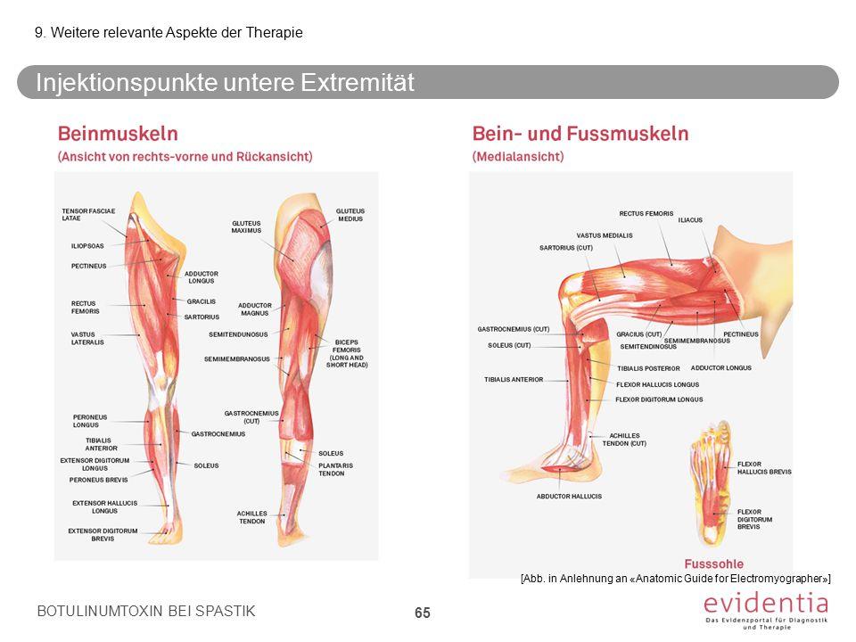 Injektionspunkte untere Extremität BOTULINUMTOXIN BEI SPASTIK 65 9. Weitere relevante Aspekte der Therapie [Abb. in Anlehnung an «Anatomic Guide for E