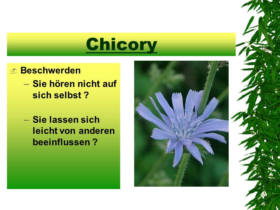 Chicory  Beschwerden –Sie hören nicht auf sich selbst ? –Sie lassen sich leicht von anderen beeinflussen ?
