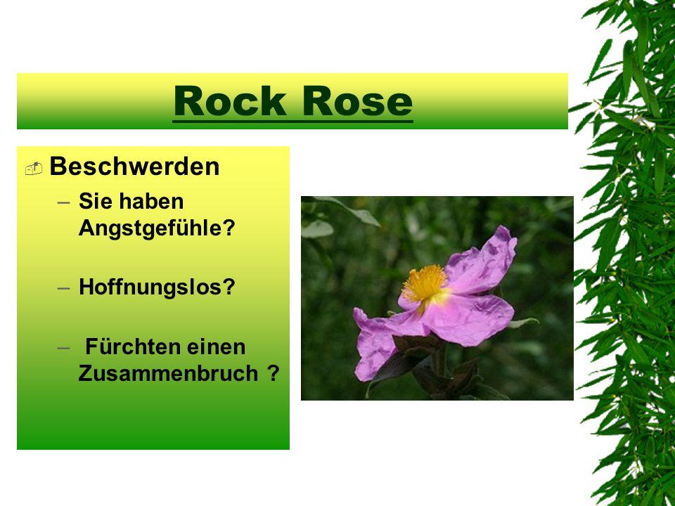 Rock Rose  Beschwerden –Sie haben Angstgefühle –Hoffnungslos – Fürchten einen Zusammenbruch