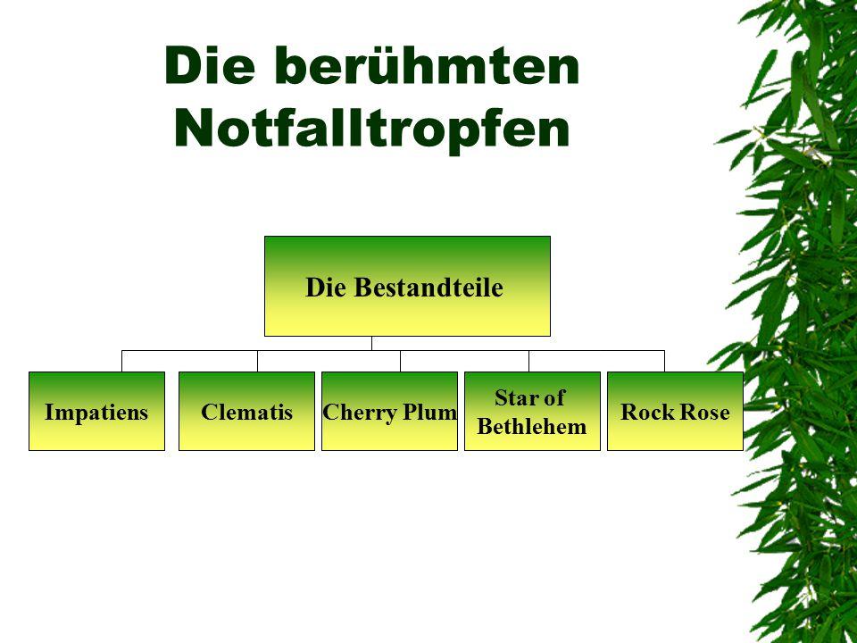 Die berühmten Notfalltropfen Impatiens Die Bestandteile Star of Bethlehem Cherry PlumClematisRock Rose