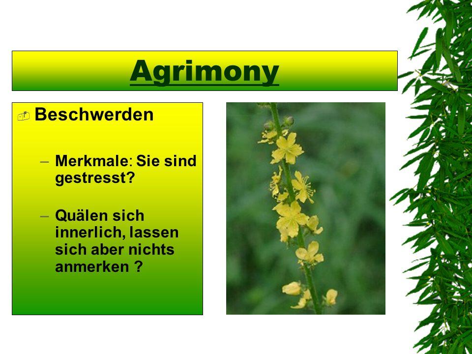 Agrimony  Beschwerden –Merkmale: Sie sind gestresst? –Quälen sich innerlich, lassen sich aber nichts anmerken ?