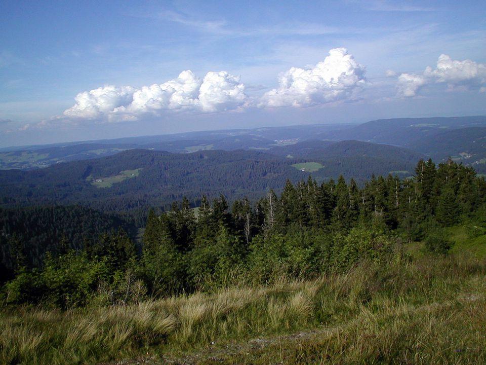 Wanderers Nachtlied Über allen Gipfeln Ist Ruh, In allen Wipfeln Spürest du Kaum einen Hauch; Die Vögelein schweigen im Walde.