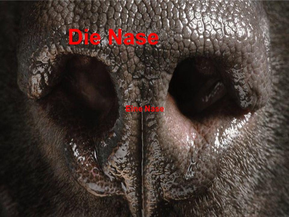 Die Nase Eine Nase