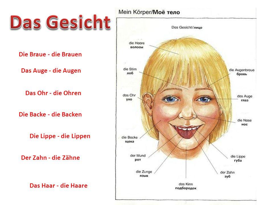 Die Braue - die Brauen Das Auge - die Augen Das Ohr - die Ohren Die Backe - die Backen Die Lippe - die Lippen Der Zahn - die Zähne Das Haar - die Haar