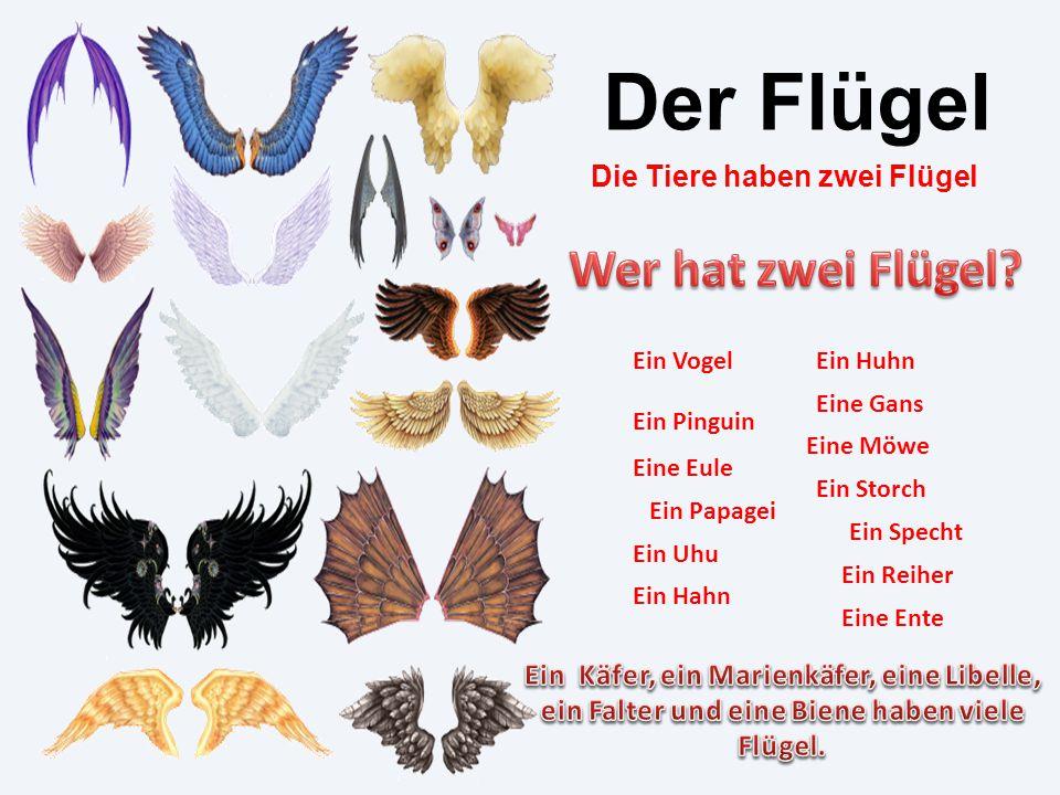 Der Flügel Die Tiere haben zwei Flügel Ein Vogel Ein Pinguin Ein Papagei Ein Hahn Ein Huhn Eine Gans Eine Möwe Ein Storch Ein Reiher Ein Specht Ein Uh