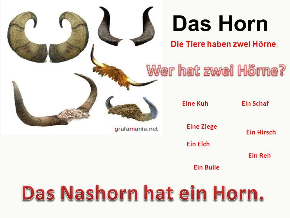 Das Horn Die Tiere haben zwei Hörne. Eine Kuh Eine Ziege Ein Schaf Ein Hirsch Ein Elch Ein Reh Ein Bulle