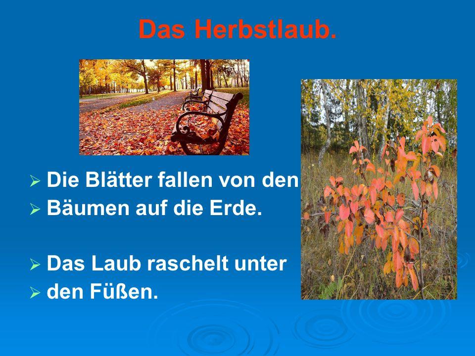 Das Herbstlaub.   Die Blätter fallen von den   Bäumen auf die Erde.   Das Laub raschelt unter   den Füßen.