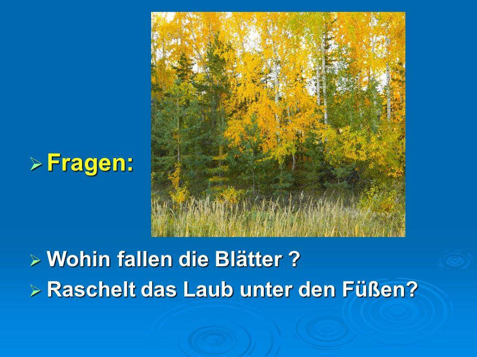  Fragen:  Wohin fallen die Blätter ?  Raschelt das Laub unter den Füßen?