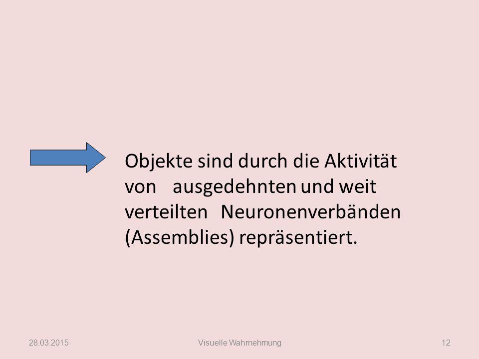 Objekte sind durch die Aktivität von ausgedehnten und weit verteilten Neuronenverbänden (Assemblies) repräsentiert. 28.03.2015Visuelle Wahrnehmung12