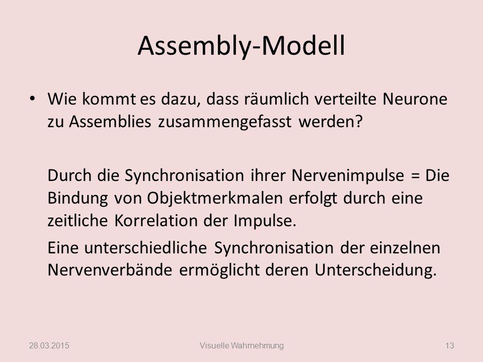 Assembly-Modell Wie kommt es dazu, dass räumlich verteilte Neurone zu Assemblies zusammengefasst werden? Durch die Synchronisation ihrer Nervenimpulse