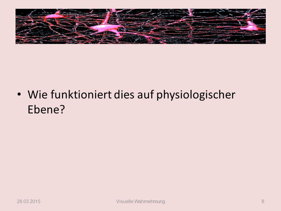 Physiologische Ebene Antwort von Neuronen Repräsentation einzelner Merkmale, keiner komplexen Merkmalskonstellationen.