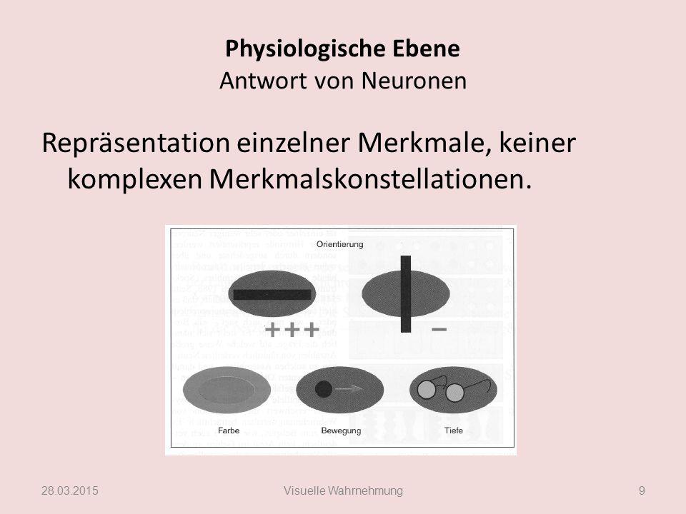 Physiologische Ebene Merkmalsanalyse erfolgt lokal Information über komplexe Objekte wird im Gehirn arbeitsteilig durch viele Neurone analysiert Für Merkmalsanalyse zuständigen Neurone sind über ausgedehnte Hirnareale verteilt.