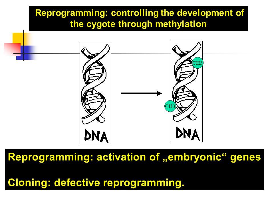 6 ©Kollek – FSP BIOGUM PID: Präimplantations- diagnostik Entnahme von zwei Zellen des Embryos und deren genetische Untersuchung 2.