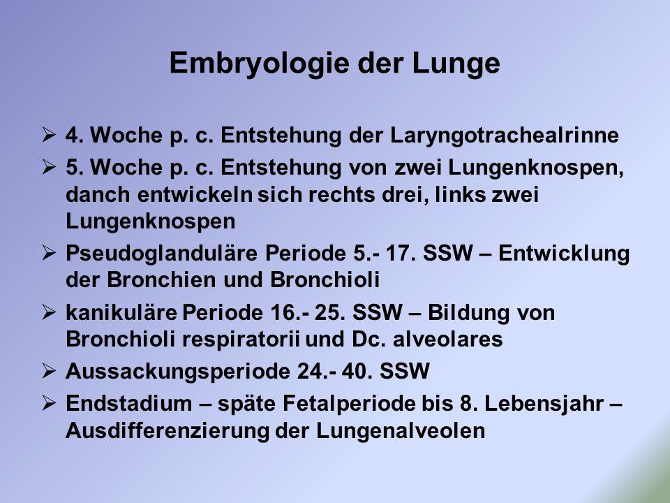 Embryologie der Lunge  4. Woche p. c. Entstehung der Laryngotrachealrinne  5. Woche p. c. Entstehung von zwei Lungenknospen, danch entwickeln sich r