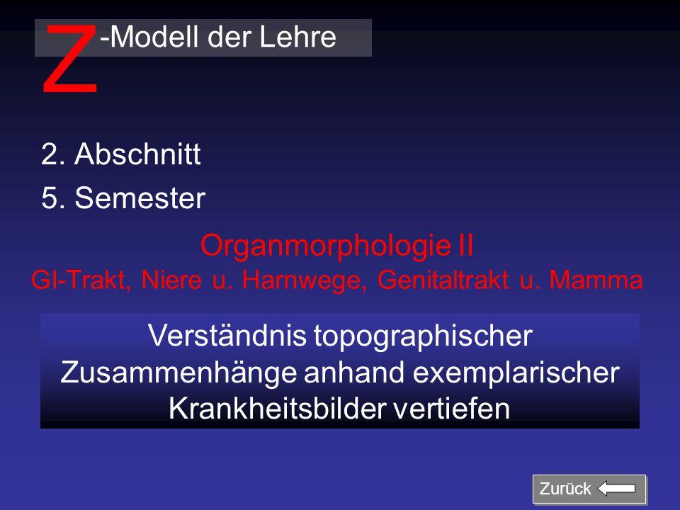 2. Abschnitt 5. Semester -Modell der Lehre Z Organmorphologie II GI-Trakt, Niere u. Harnwege, Genitaltrakt u. Mamma Verständnis topographischer Zusamm