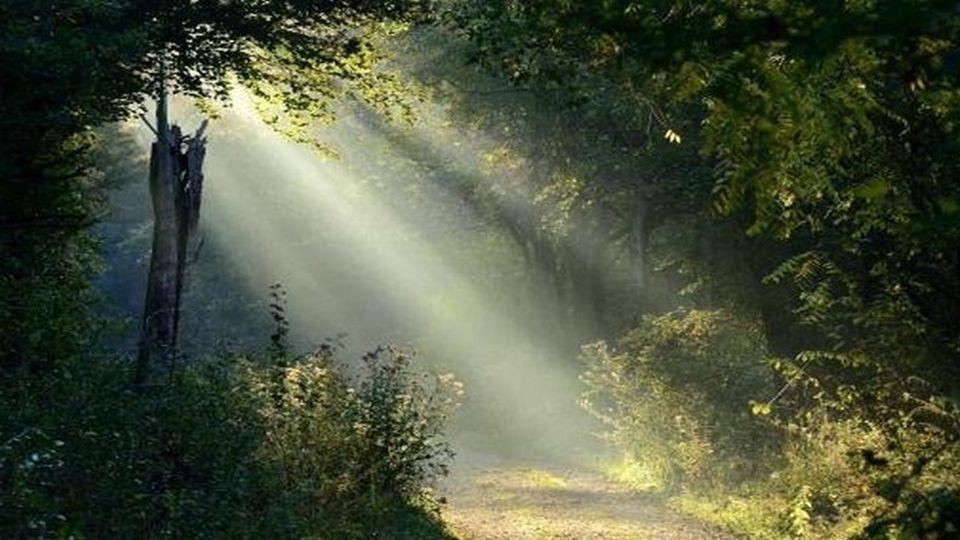 Wird ein Weg, dir lang erscheinen, lade den Mut und die Zuversicht ein, dich zu begleiten,sie versorgen dich mit dem emotionalen Proviant, des Ankommnes.