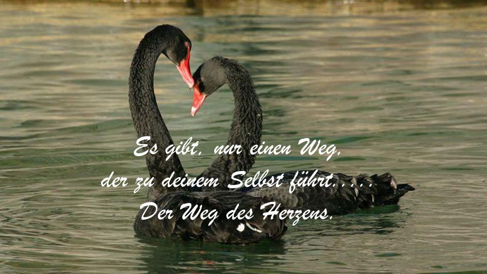Es gibt, nur einen Weg, der zu deinem Selbst führt..... Der Weg des Herzens.