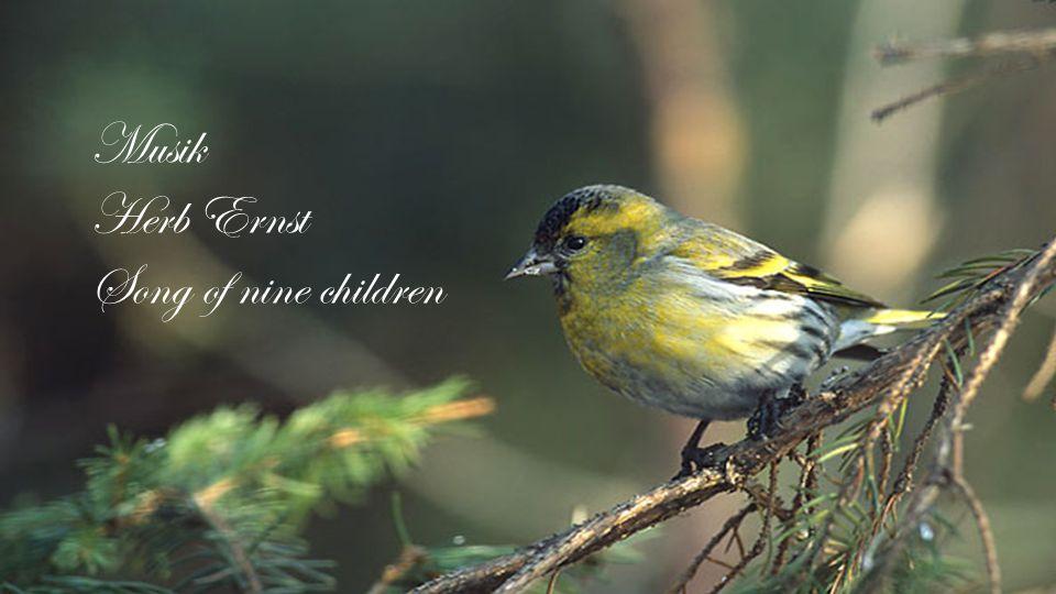 Musik Herb Ernst Song of nine children