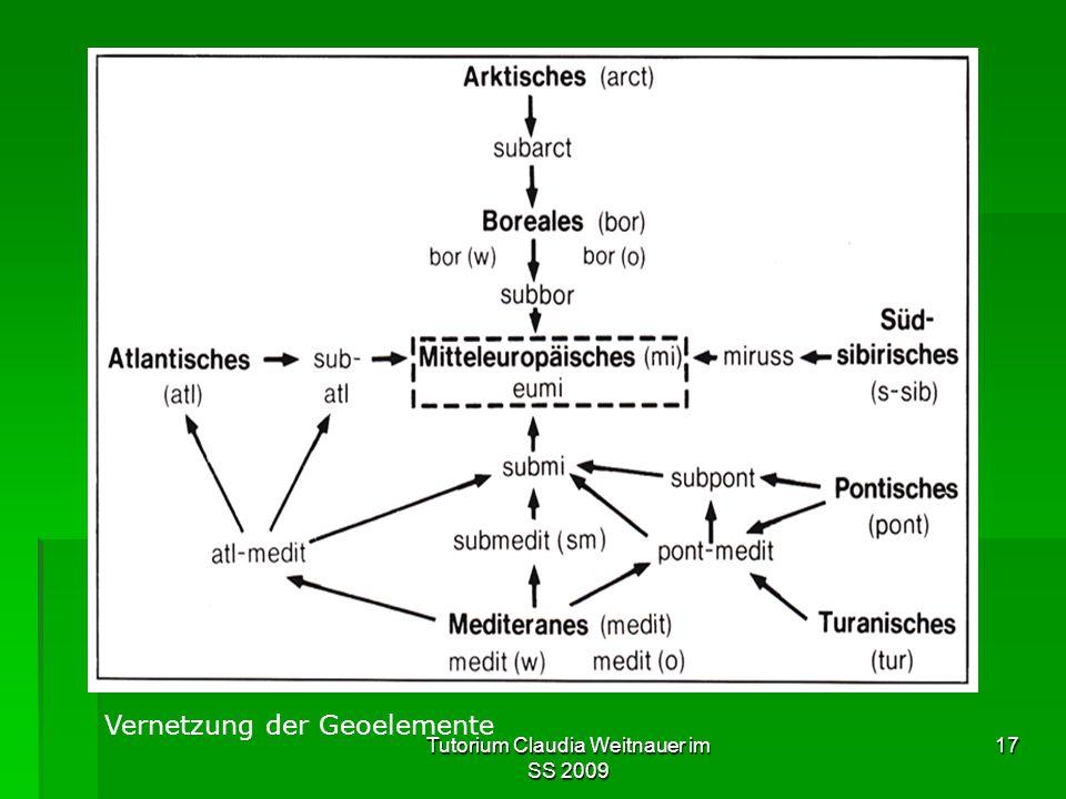 Tutorium Claudia Weitnauer im SS 2009 17 Vernetzung der Geoelemente