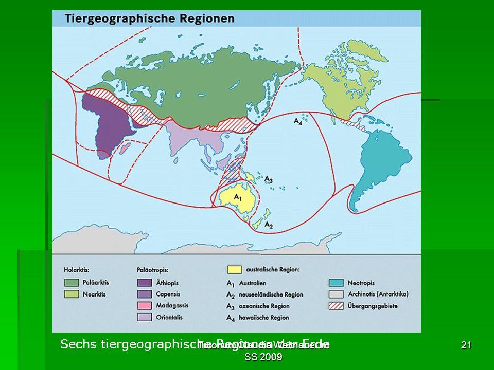 Tutorium Claudia Weitnauer im SS 2009 21 Sechs tiergeographische Regionen der Erde