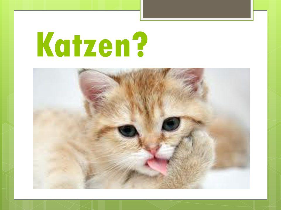 Katzen?