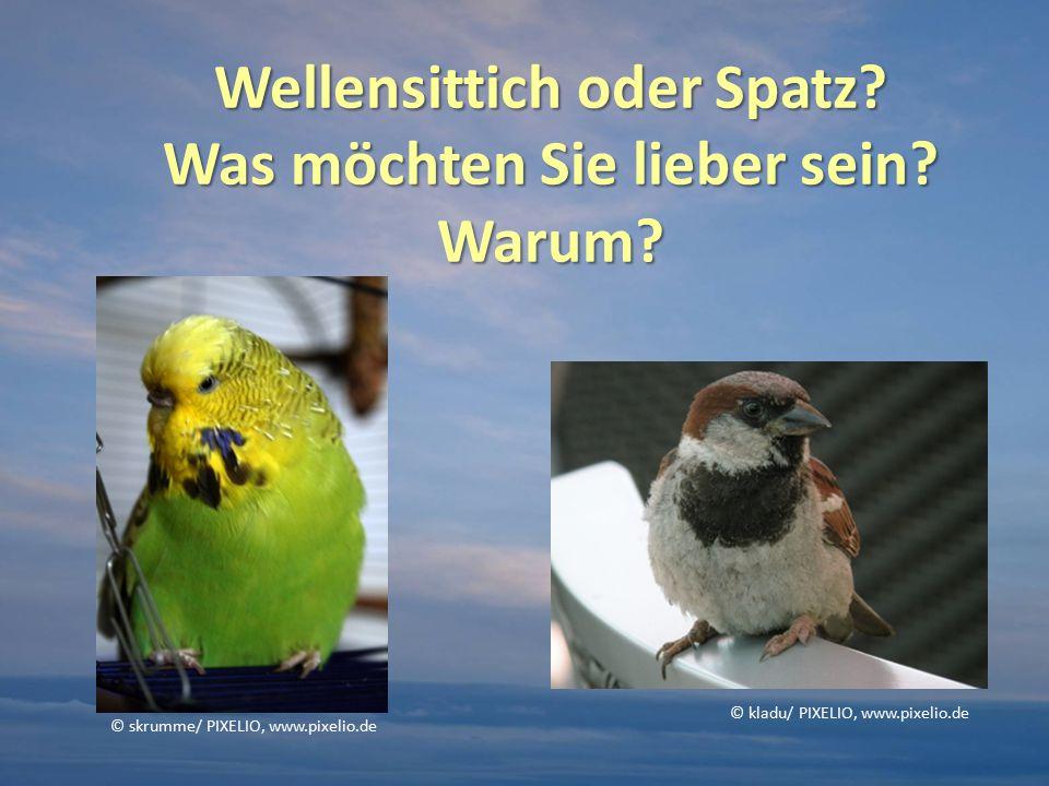 Attribute Welcher Vogel wird hier eher beschrieben.