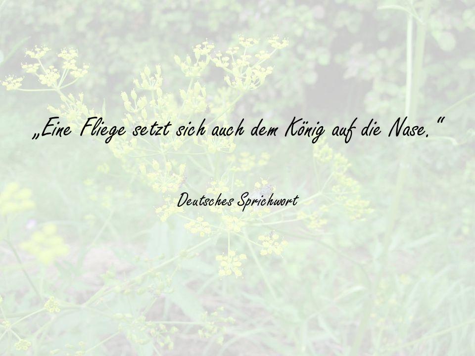 """""""Eine Fliege setzt sich auch dem König auf die Nase. Deutsches Sprichwort"""