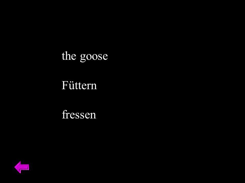 the goose Füttern fressen