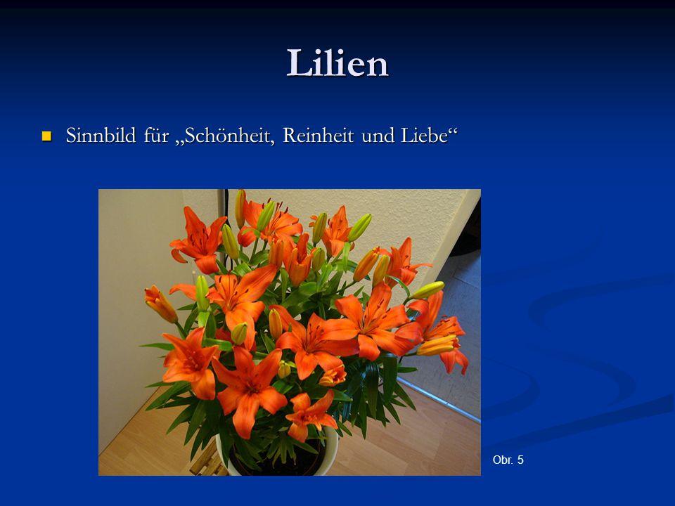 """Lilien Sinnbild für """"Schönheit, Reinheit und Liebe Sinnbild für """"Schönheit, Reinheit und Liebe Obr."""