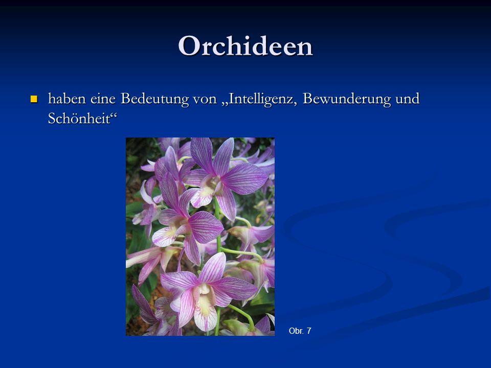 """Orchideen haben eine Bedeutung von """"Intelligenz, Bewunderung und Schönheit haben eine Bedeutung von """"Intelligenz, Bewunderung und Schönheit Obr."""