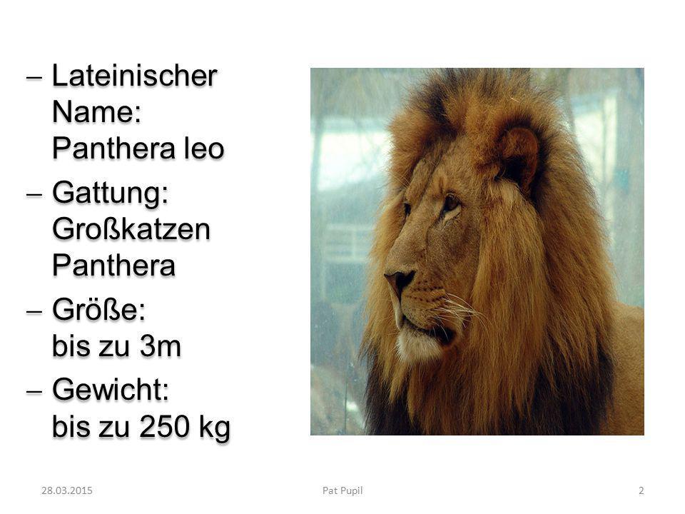  Lateinischer Name: Panthera leo  Gattung: Großkatzen Panthera  Größe: bis zu 3m  Gewicht: bis zu 250 kg  Lateinischer Name: Panthera leo  Gattung: Großkatzen Panthera  Größe: bis zu 3m  Gewicht: bis zu 250 kg 28.03.20152Pat Pupil