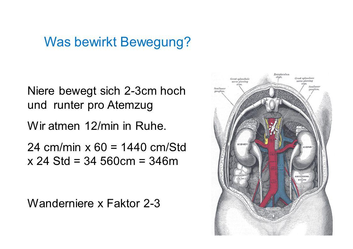 Was bewirkt Bewegung? Niere bewegt sich 2-3cm hoch und runter pro Atemzug Wir atmen 12/min in Ruhe. 24 cm/min x 60 = 1440 cm/Std x 24 Std = 34 560cm =