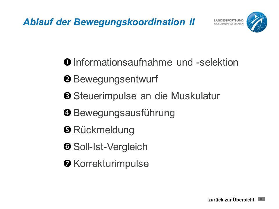 Ablauf der Bewegungskoordination II  Informationsaufnahme und -selektion  Bewegungsentwurf  Steuerimpulse an die Muskulatur  Bewegungsausführung 