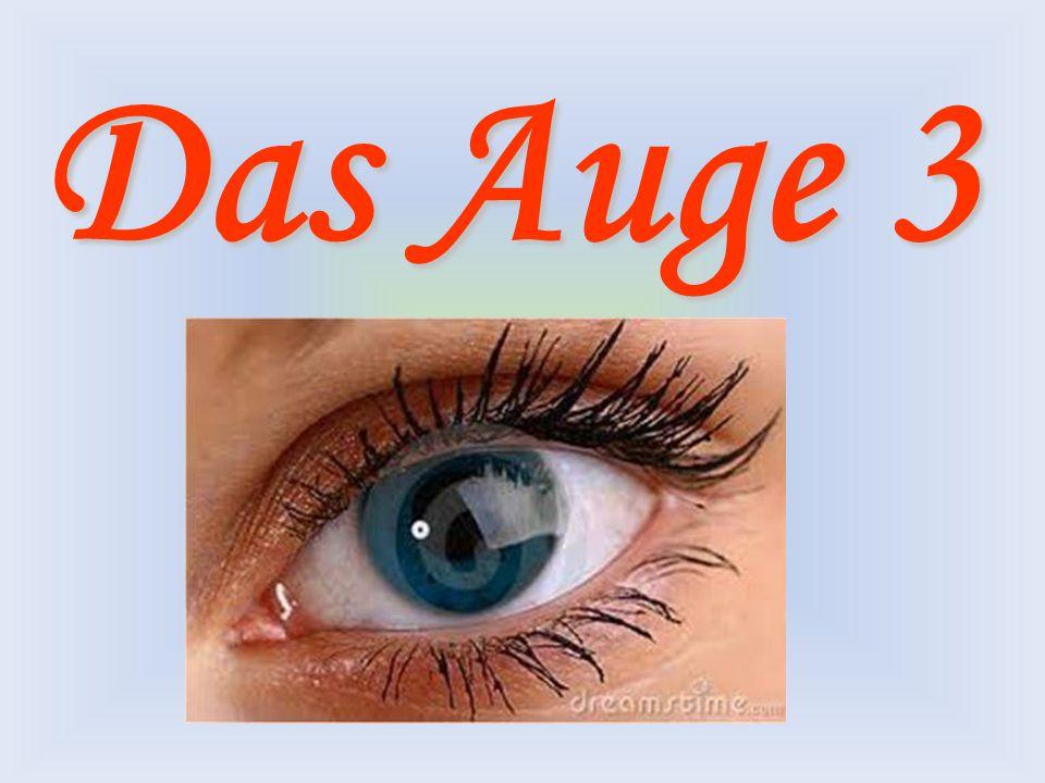 """Mit der PPP """"Auge 3 sollt ihr: -Kenntnisse über den Bau unseres Auges und über die Funktion bzw."""