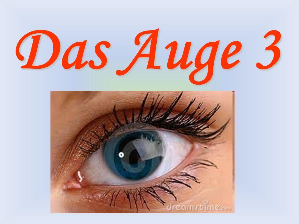 Das Auge – Vortrag 3 Gestalte einen Zusammenhängenden Vortrag indem du die Ergebnisse der nachfolgenden Aufgaben miteinander verbindest.