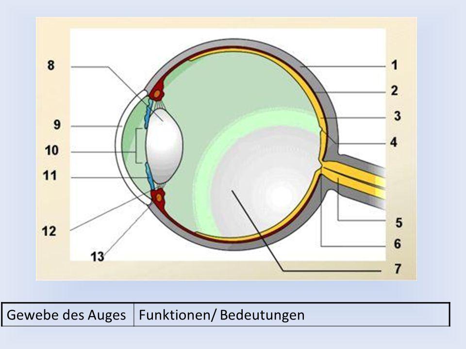Gewebe des AugesFunktionen/ Bedeutungen