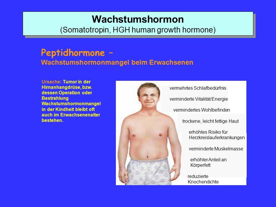 Wachstumshormon (Somatotropin, HGH human growth hormone) Peptidhormone – Wachstumshormonmangel beim Erwachsenen Ursache: Tumor in der Hirnanhangdrüse,