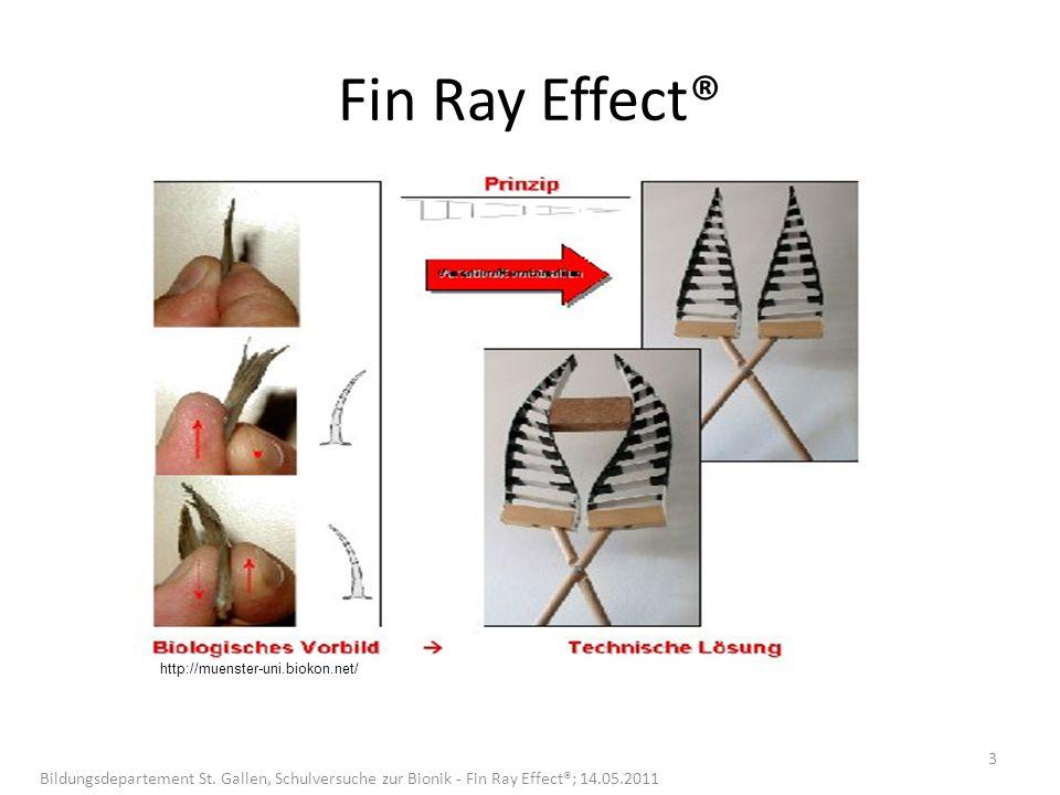 Fin Ray Effect® http://muenster-uni.biokon.net/ 3 Bildungsdepartement St. Gallen, Schulversuche zur Bionik - Fin Ray Effect®; 14.05.2011