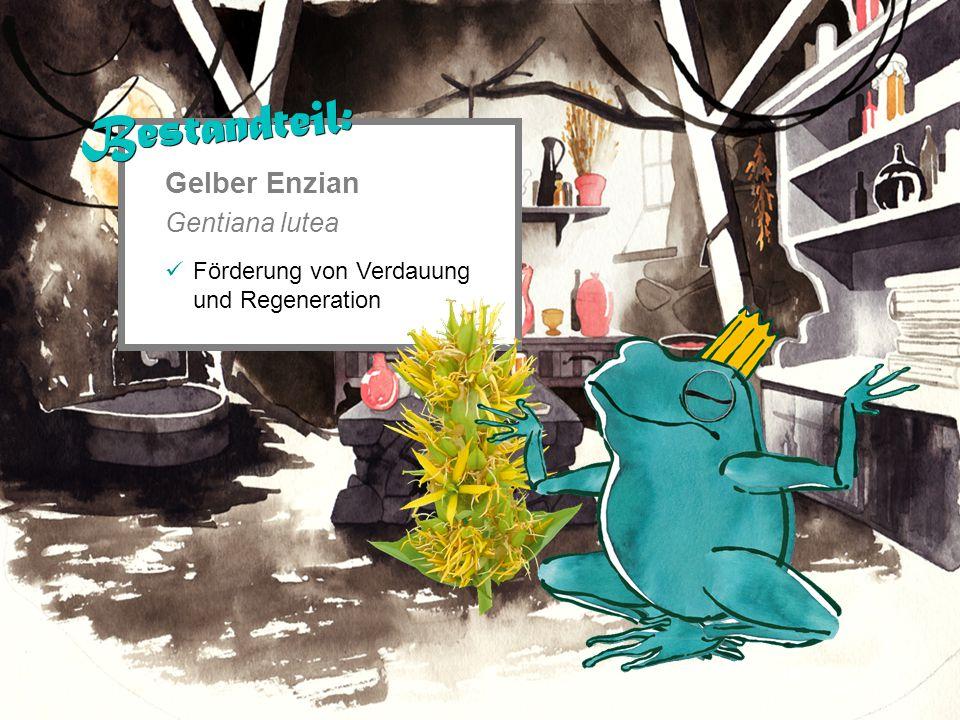 Gelber Enzian Gentiana lutea Förderung von Verdauung und Regeneration Bestandteil: