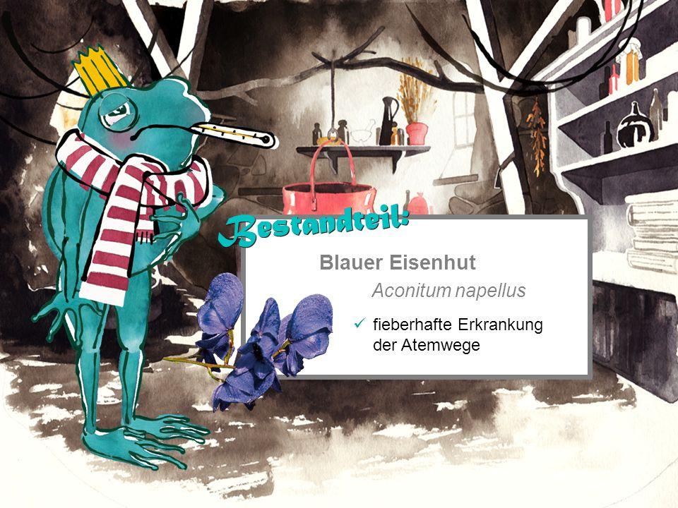 Blauer Eisenhut Aconitum napellus fieberhafte Erkrankung der Atemwege Bestandteil: