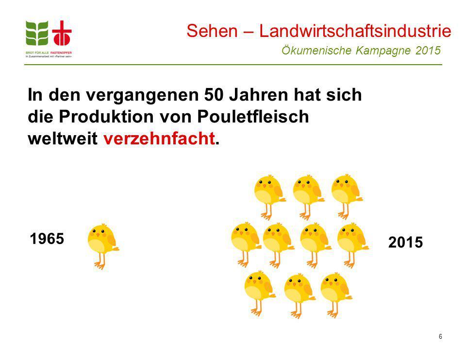 Ökumenische Kampagne 2015 6 In den vergangenen 50 Jahren hat sich die Produktion von Pouletfleisch weltweit verzehnfacht.