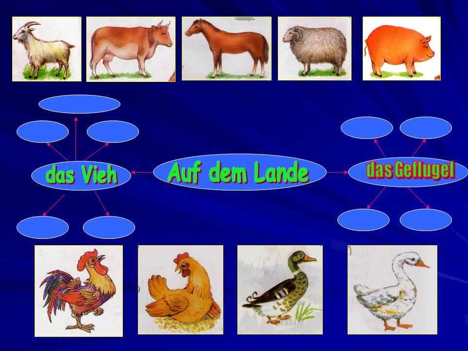 Die Ziege Die Kuh Das Pferd Das Schaf Das Schwein Der Hahn Das Huhn Die Ente Die Gans