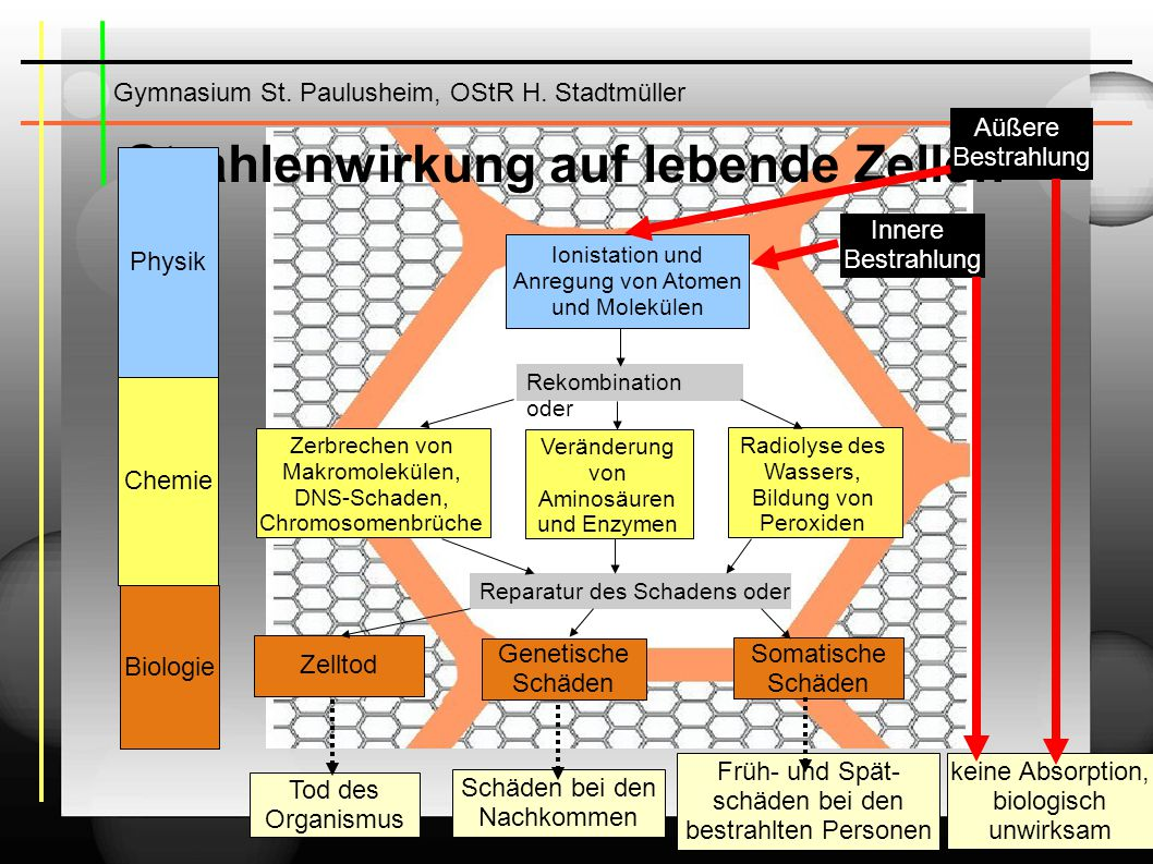 über die Nahrungskette Gymnasium St.Paulusheim, OStR H.
