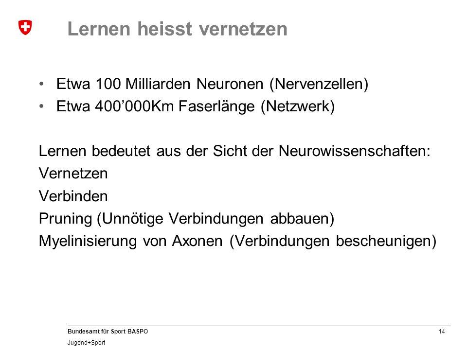14 Bundesamt für Sport BASPO Jugend+Sport Lernen heisst vernetzen Etwa 100 Milliarden Neuronen (Nervenzellen) Etwa 400'000Km Faserlänge (Netzwerk) Ler