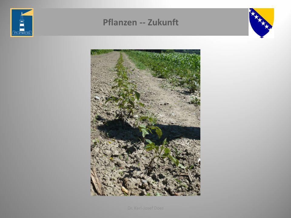 Pflanzen -- Zukunft Dr. Karl-Josef Does